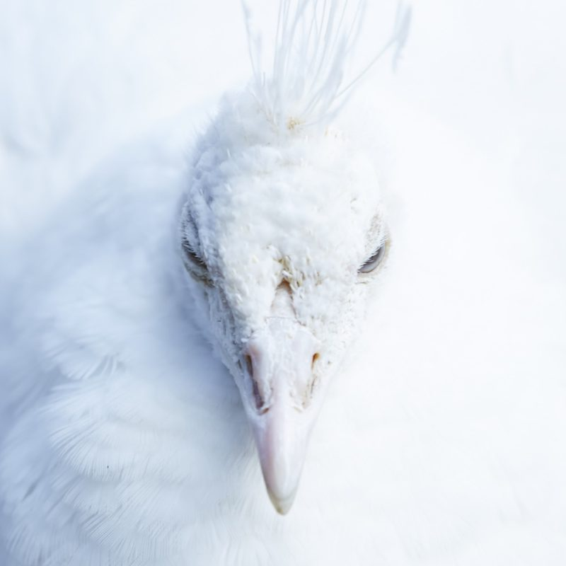 Animal - 11